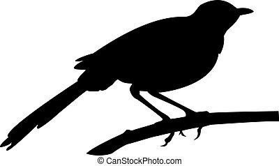 Blackbird - a silhouette of a blackbird on branch