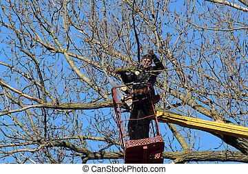 Pruning trees using a lift-arm Chainsaw Cutting unnecessary...
