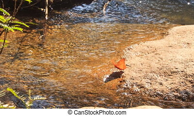 Orange Butterfly Flaps Wings on Stone by River Water -...
