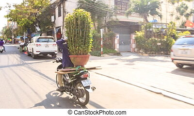 Man Drives Chrysanthemums on Scooter along Street in Vietnam...