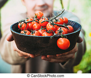 Tomatoes - Tomato harvest Farmers hands with freshly...