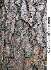 pino, árbol, corteza, texture., ,