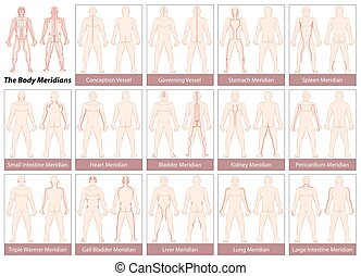 Body Meridians Chart - Body meridians - Chart with main...