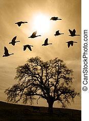 Aged Bare Oak Tree in Winter Fog - Silhouette of flying...