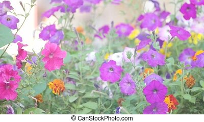 Many petunia flowers in the garden pastel colors