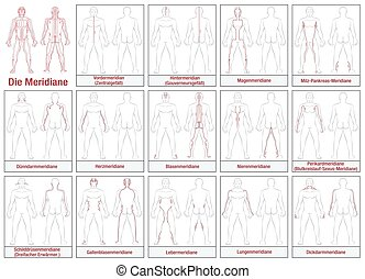 Body Meridians GERMAN - Body meridians - GERMAN LABELING -...