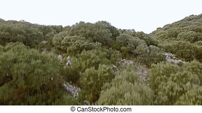 4K Aerial, Flight above forest in Andalusia, Spain
