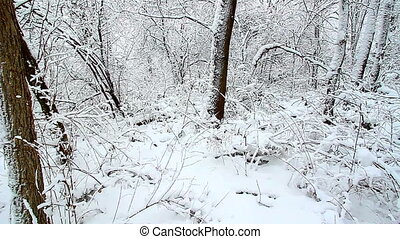 Winter Wonderland Northern Illinois - Winter wonderland at...