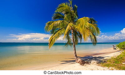 Wind Shakes High Palm Standing on Edge of Golden Sand Beach...