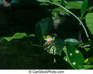 木, じろじろ見られた, カエル, 赤