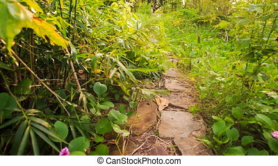 Camera Moves from Stone Path among Plants to Shed with Reed...