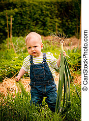 Growing vegetables - baby with leeks - Little child carrying...