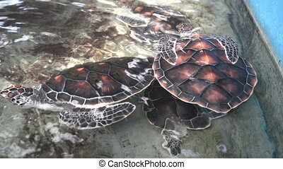 View of beautiful turtles in aquarium Thailand - View of...