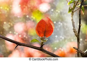 Bougainvillea flower - Bougainvillea flower in the garden