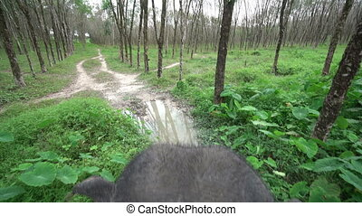 Top view of elephant ride through jungle. Thailand