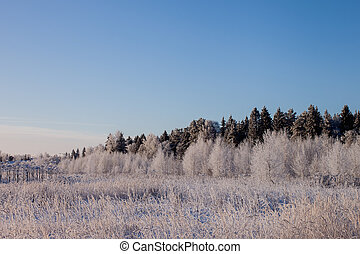 Frosty day - Landscape. Nature. The wood and a field in...