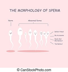 The morphology of the sperm. Normal and abnormal sperm...