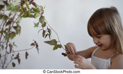 Girl tearing a basil leaf off and smelling it - Little girl...