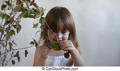 Girl tearing a basil leaf off - Little girl is tearing a...