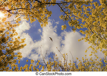 Sky with flowering branches - Spring sky: cloud with swallow...