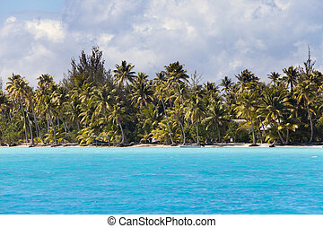 island with palm trees in the ocean