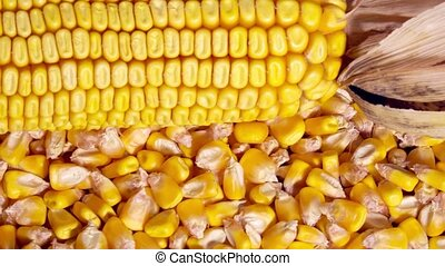 Corn crop grains on rotating plate, top view, full frame