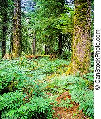Forest, Oregon