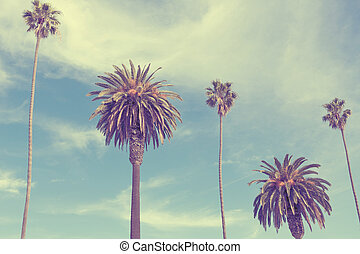 Palm trees at Santa Monica beach. Vintage post processed....