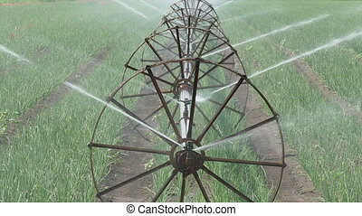 Agriculture, onion field watering - Irrigation system for...