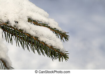 Fir tree branch with fresh snow