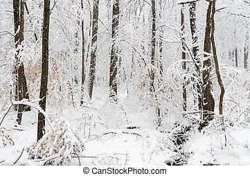 Snow Covered Trees - Snow covered trees after a snow storm