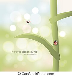 Natural background. Ladybird on a stalk on a sunny day