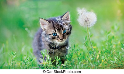 Cute cat - Little cat playing on the grass close up