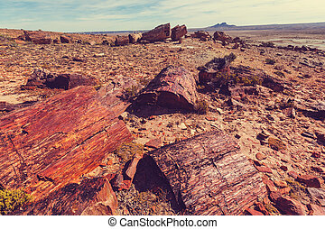 Petrified forest in Argentina - Petrified wood in Patagonia,...