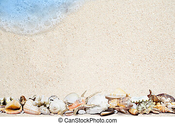 tropicais, praia, arenoso, conchas