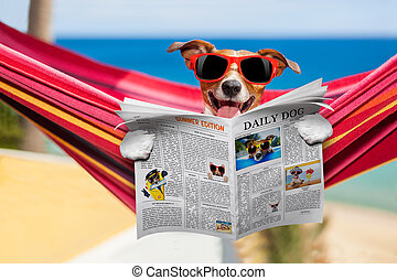 dog on hammock in summer - jack russell dog relaxing on a...
