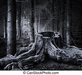 Spooky forest with dry tree stump