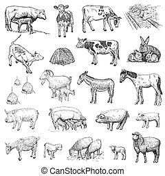 mammals hands drawing - mammals. hand drawing set of vector...