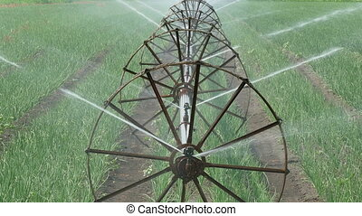 Agriculture, onion field watering - Agriculture, irrigation...
