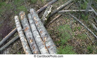Logger loads logs. View taken with action camera - Modern...
