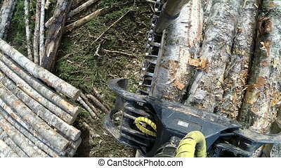 Loading logs Top view taken with action camera - Woodworking...
