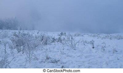 Misty winter landscape in blue