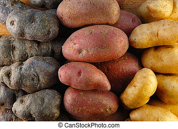 Fingerling Potatoes in Three Colors - Three colors of...