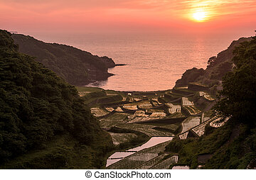 Sun and rice terraces - Sinking sun and seashore terraced...