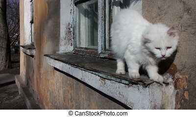 White Stray Cat Walking on the Windowsill in the House