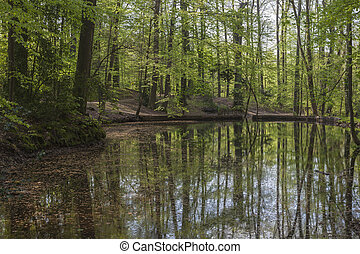 Pond in Lower Saxony, Germany - Pond at the casino park in...