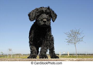 Filhote cachorro, cao, Agua