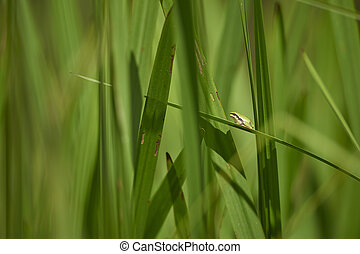 a tree frog sitting in reed