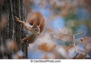 Squirrel - A squirrel climbing a tree