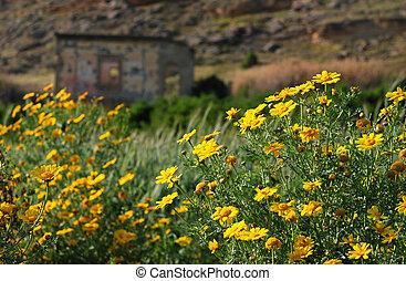 Spring Season - Abandoned house at Ayios Sozomenos village...